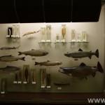 zoologijos-muziejus18