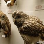 zoologijos-muziejus26