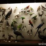 zoologijos-muziejus28