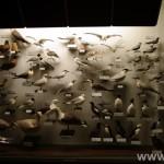 zoologijos-muziejus29