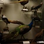 zoologijos-muziejus31