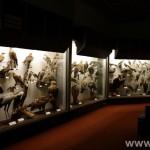 zoologijos-muziejus32