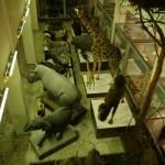 zoologijos-muziejus33
