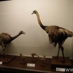 zoologijos-muziejus35