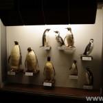 zoologijos-muziejus36
