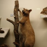 zoologijos-muziejus38