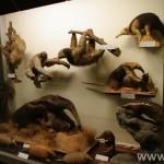 zoologijos-muziejus39
