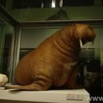 zoologijos-muziejus40