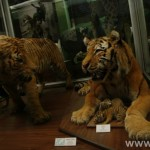 zoologijos-muziejus41