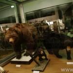 zoologijos-muziejus42