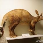 zoologijos-muziejus43