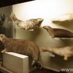 zoologijos-muziejus45