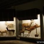 zoologijos-muziejus47