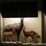 zoologijos-muziejus48