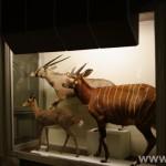 zoologijos-muziejus49