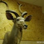 zoologijos-muziejus64