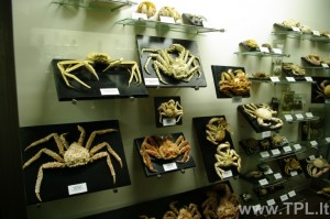 zoologijos-muziejus9