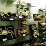 zoologijos-muziejus91