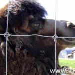 gruto-parko-kupranugaris