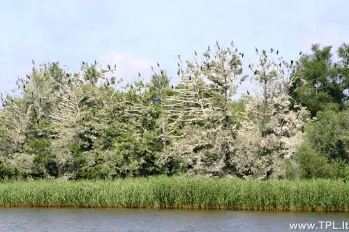 nemuno-deltos-regioninis-parkas