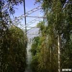 girioniu parkas26
