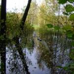 girioniu parkas31