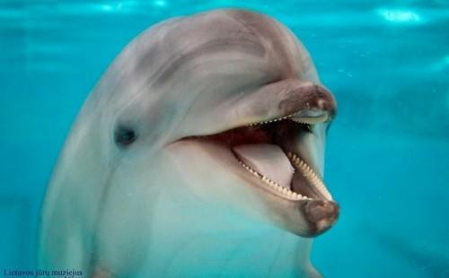 delfinai-naujose-juru-muziejaus-patalpose-63672516